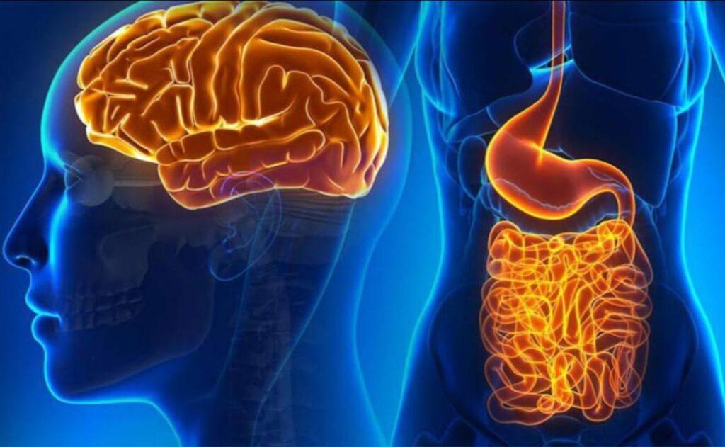 Ruột là bộ não thứ 2 của con người